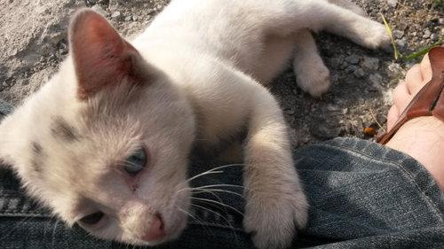 かわいそうな子猫を見つけた03
