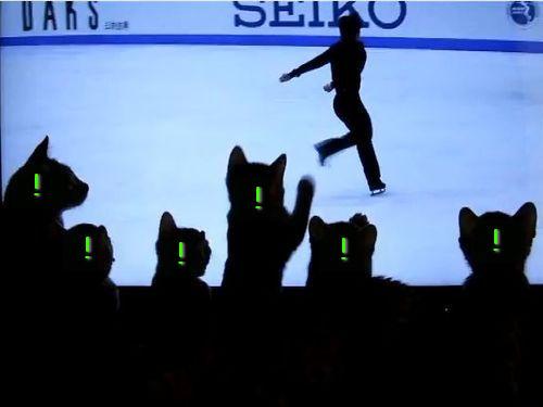 フィギュアスケートに興奮する猫たち