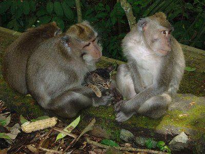 猿と猫の仲07