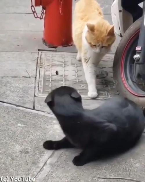 猫の修羅場シーン05