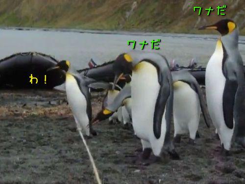ペンギン・トラップ00