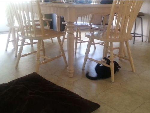 新しい移動法を覚えた猫01