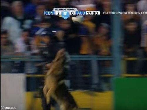 サッカーと警察犬02