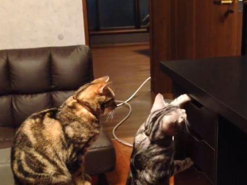 おやつの入った引き出しを開ける猫01