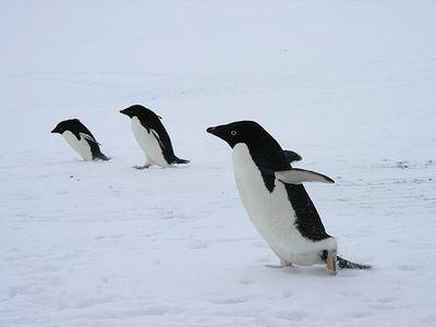 高機動型ペンギン