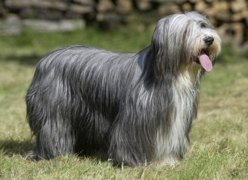 犬種は100年でこう変わった12