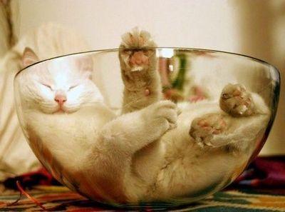 猫はコーヒーが嫌いなんです、いや本当は好きかも