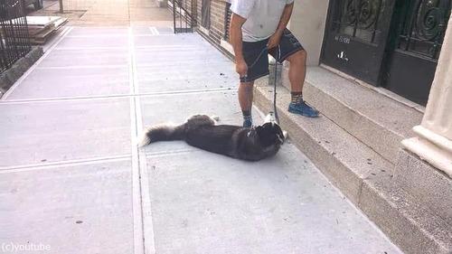 散歩大好き犬03