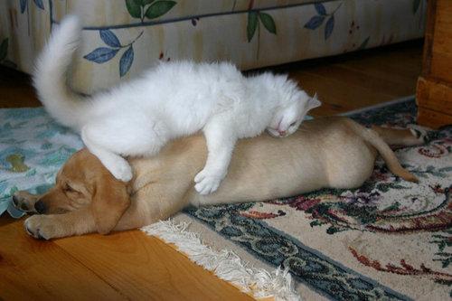 犬の寝相19