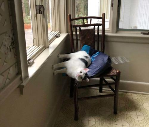 重力を無視する猫02