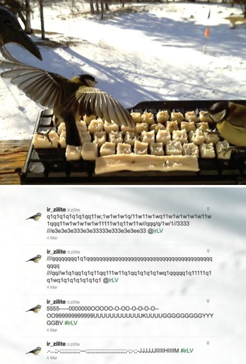 ツイートする鳥たち01