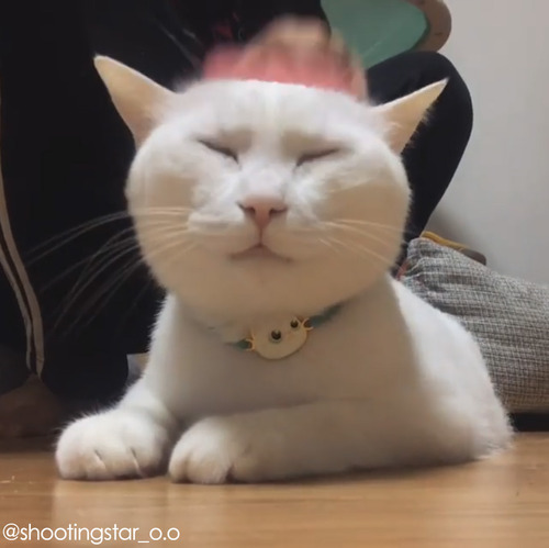 うちの猫のブラッシング02