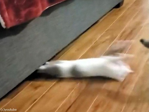 猫、逆さにスライディング02