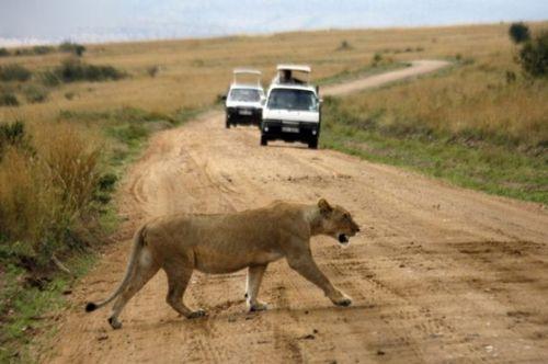 道路を渡る動物15