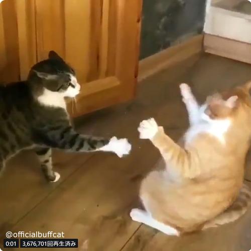 にらみあう猫…まさかのオチに笑う03