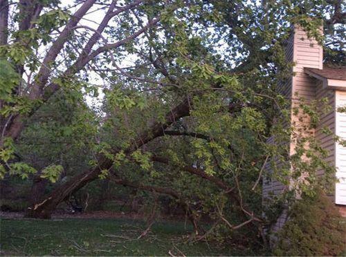 大木が倒れてきた02