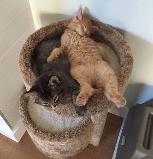 ベッドをシェアしていた子猫2匹01