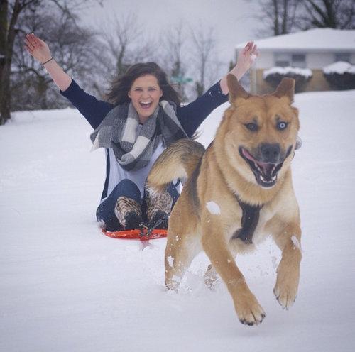 力持ちの犬と雪01