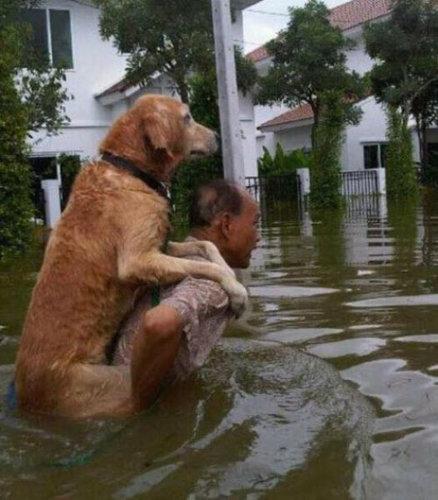 助けられた動物たち22