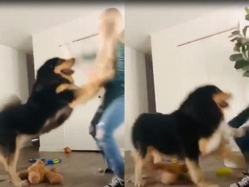 大型犬を飼うときに気を付けること02