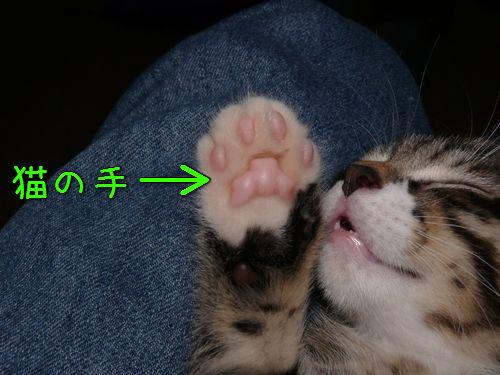 猫の手を借りる方法00