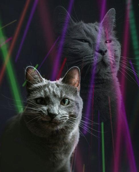 猫シッター02