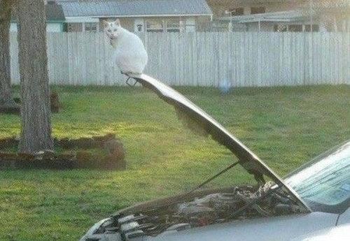 バランス猫12