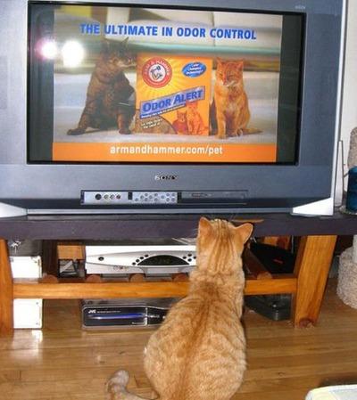 猫の番組を見つめる猫08