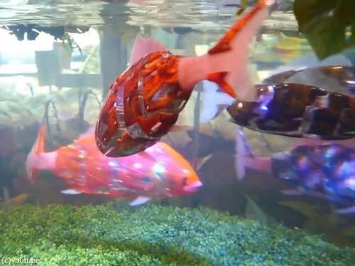 日本の魚ロボット00