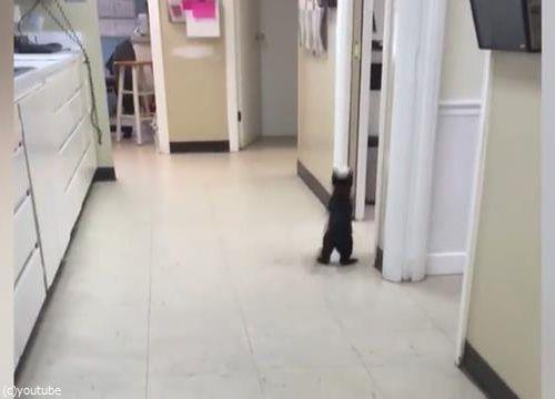 ピンポン猫08