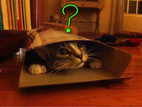 箱入り猫00