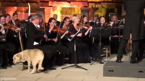 オーケストラ演奏中に犬が入ってきた03