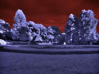 カラー赤外線09