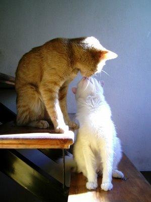 愛し合い猫19