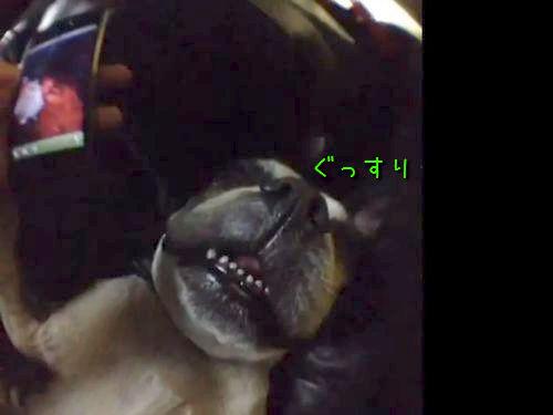 犬が起きた音00