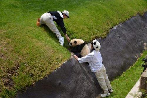 パンダのよいしょよいしょ03