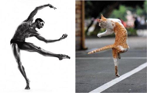 猫が人間の男よりも魅力的な理由16