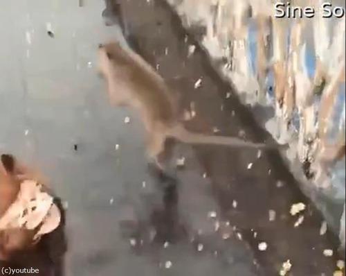 サルも水たまりですべる01