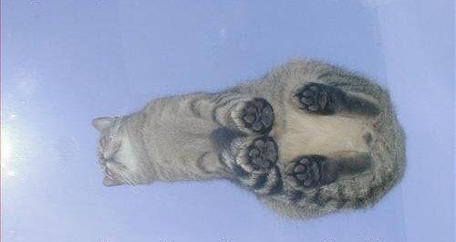 ガラスの上の猫03