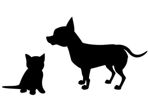先住チワワと子猫