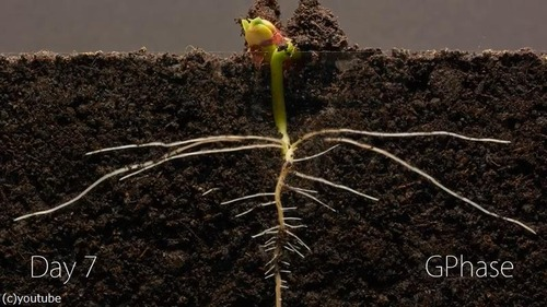 植物タイムラプス04