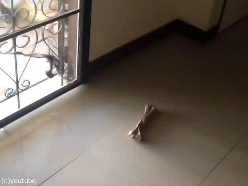ハスキー犬「これが今の僕の人生です。僕はソファです」01