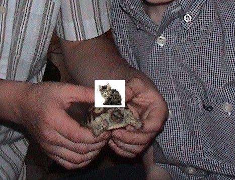 ともに成長した少年と亀04