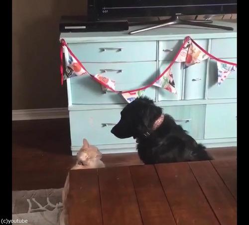 猫が犬に大胆な愛の告白01