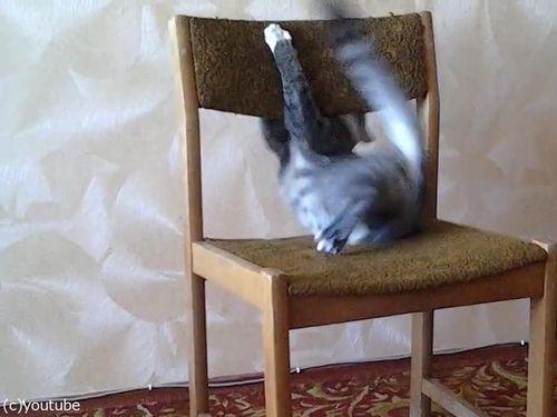 猫がイスでアクロバティック02