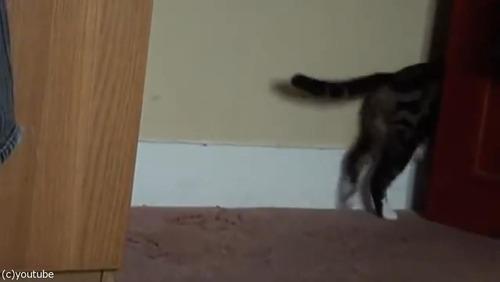 ママ猫が、迷子の子猫を連れ帰るとき02