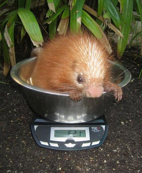 動物の体重の測り方22