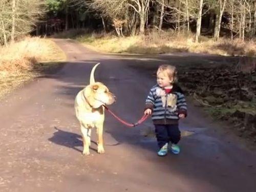 ベストフレンドな犬と子供