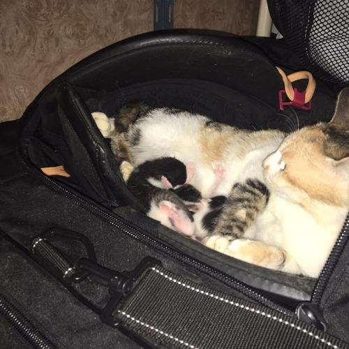 ホッケーのバッグで猫が子育て04