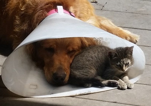 エリザベスカラーの犬と猫03